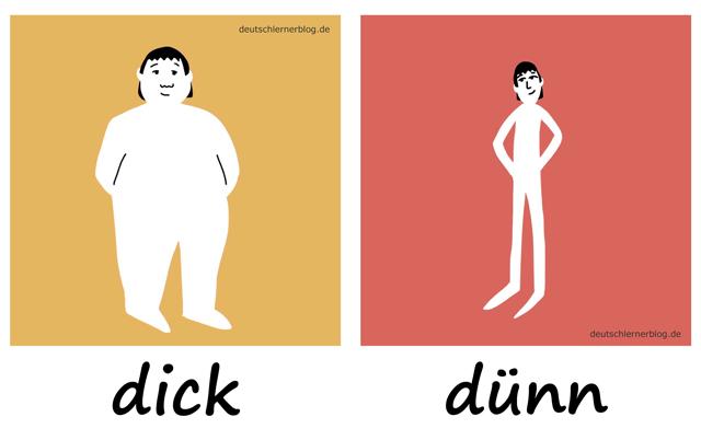 dick - dünn - Adjektive - Deutsch Adjektive - deutsche Adjektive - Adjektive Deutsch - Adjektive Übungen - Wortschatz Deutsch - Adjektive Bilder - Adjektive mit Bildern