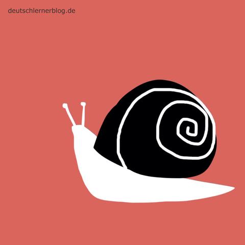 langsam - Schnecke - Adjektive - Bilder - Wortschatz mit Bildern - Wortschatzbilder