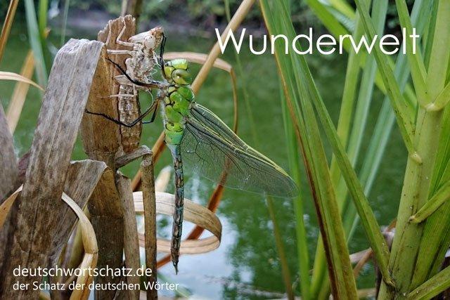 Wörter lernen Deutsch - Wunderwelt