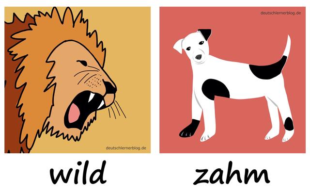wild - zahm - wilde Tiere - Liste Adjektive - deutsch Adjektive Liste