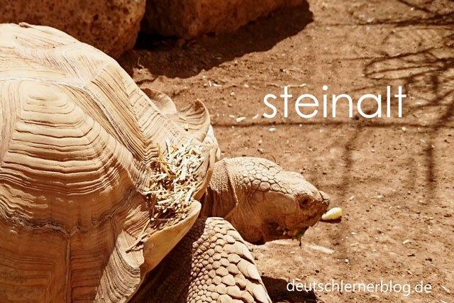 steinalt - Schildkröte