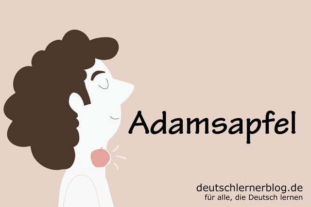Adamsapfel - deutsche Küche - deutsches Essen - deutsche Rezepte - deutsche Speisen