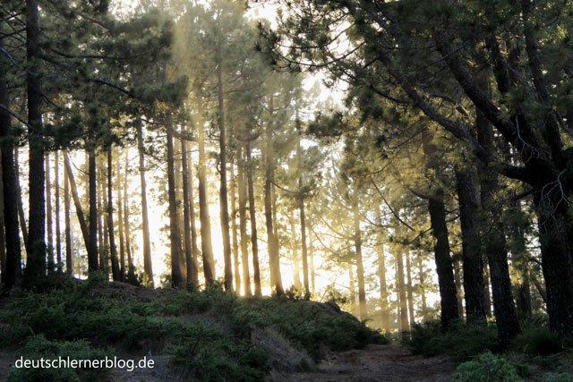 Orte die ich mag - Wald