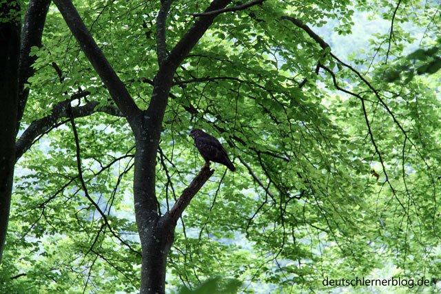Orte die ich mag - Wald - Tiere - Bäume