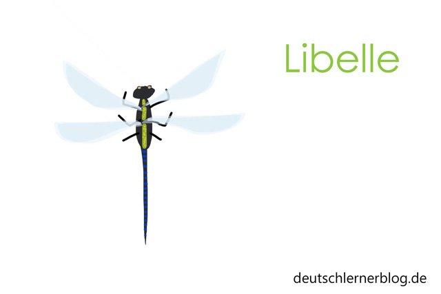 Libelle - Wortschatz lernen - Vokabeln lernen - Deutsch lernen - mit Bildern lernen