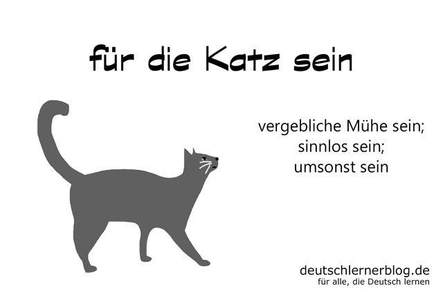 für die Katz sein - deutsche Redewendungen mit Bildern - delia tello