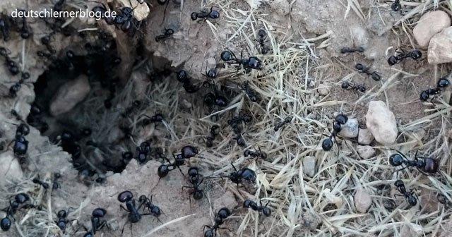 Bedeutung von Ameisen