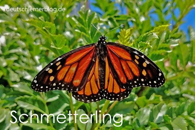 Schmetterling | schöne deutsche Wörter mit Bildern