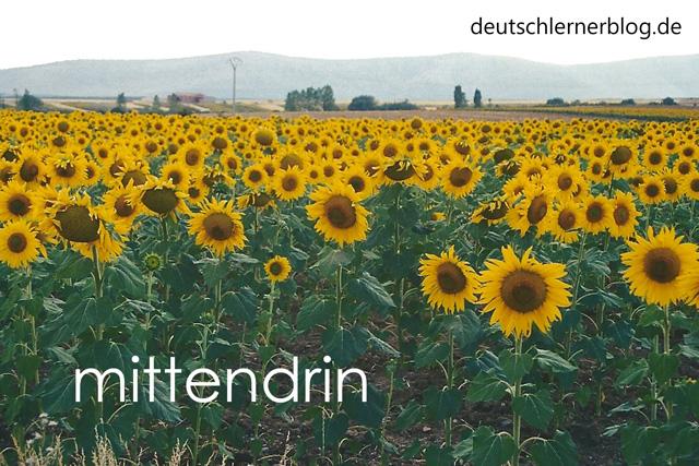 mittendrin - schöne deutsche Wörter mit Bildern