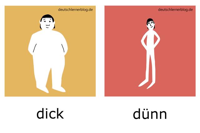 dick - dünn - Figur - Körper - Adjektive