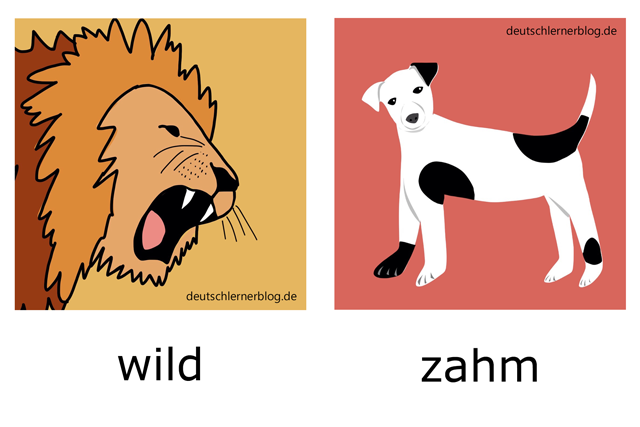 wild - zahm - Adjektive