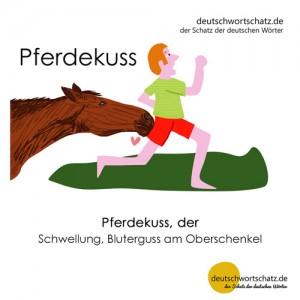 Pferdekuss - Wortschatz Deutsch Bilder
